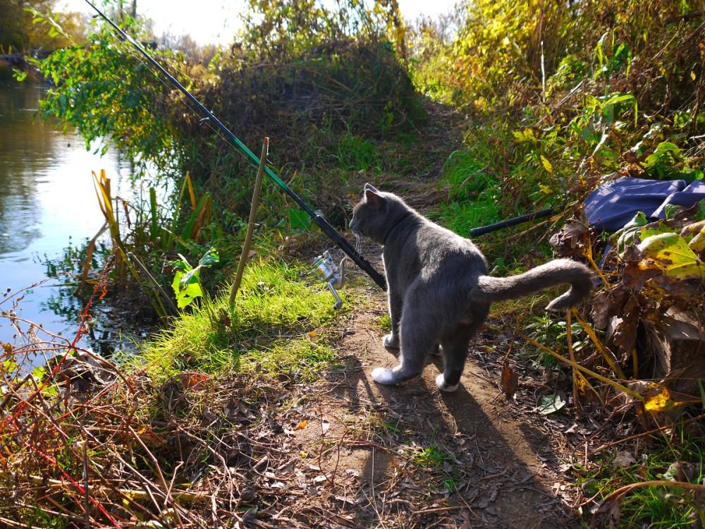 Картинка рыбалка с котом