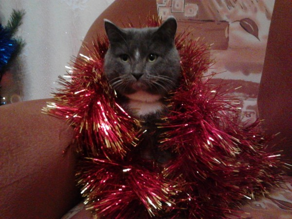 Федор на новый год