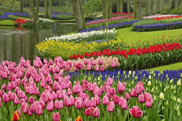 парк Кекенхоф, Нидерланды
