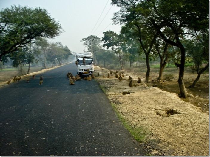індійські дороги, мавп'яча засада