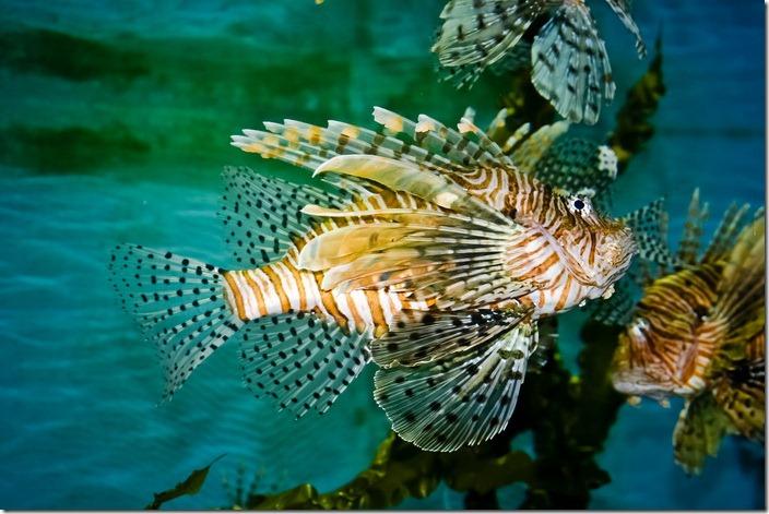Океанаріум, тропічні риби