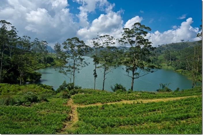 Цейлонський чай