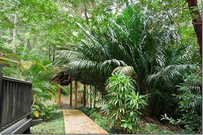 Пенанг, джунглі