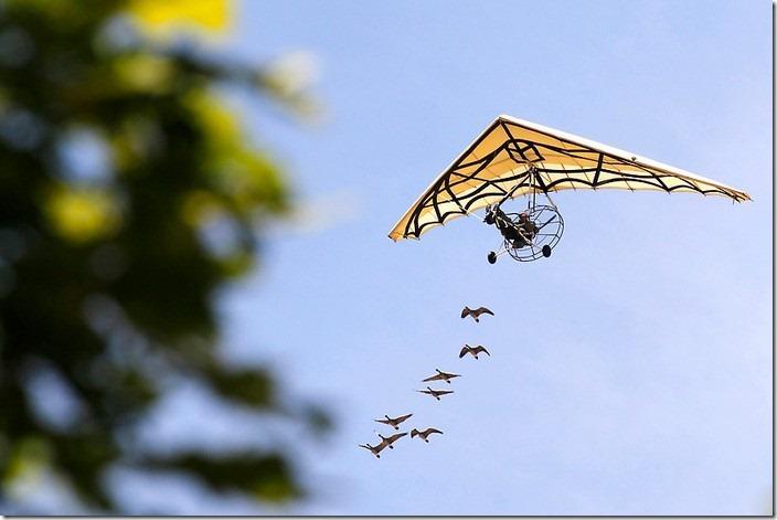 Ой, летіли дикі гуси