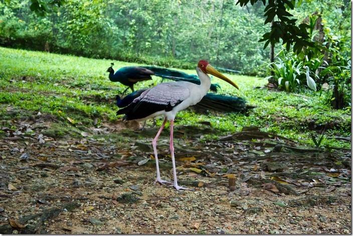 Пташиний парк Куала-Лумпура