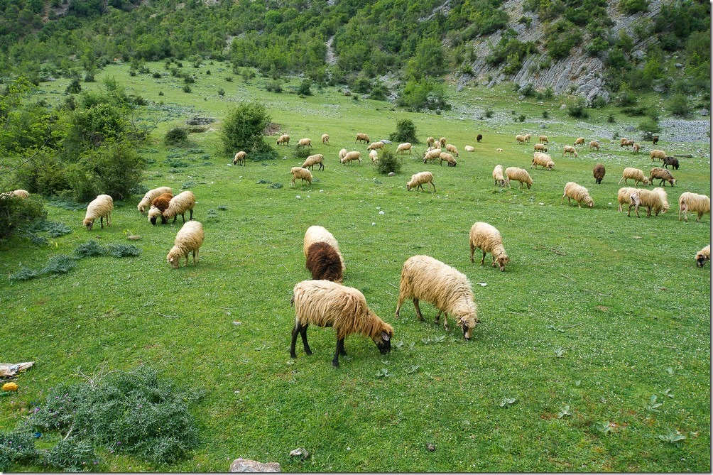albania_099