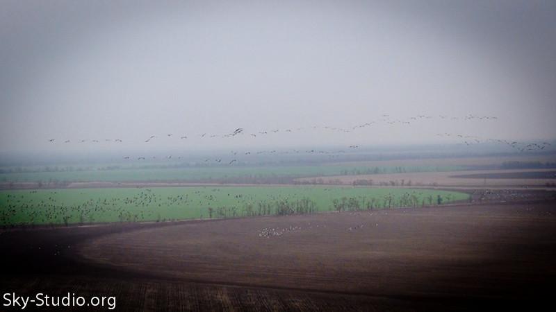 поле с птицами