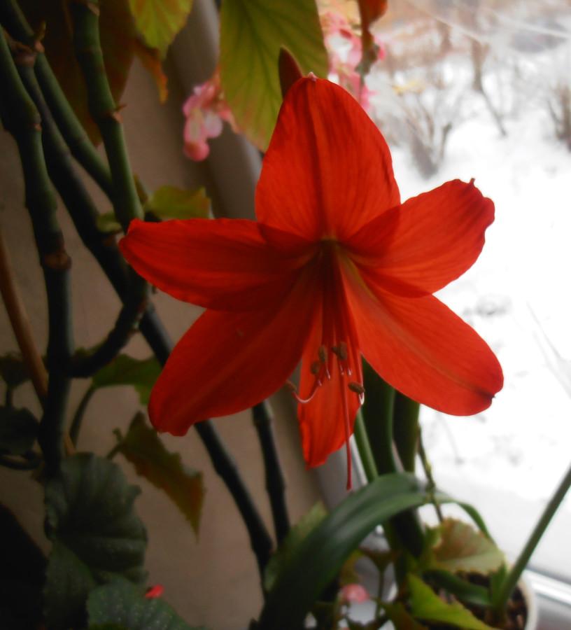 Какой комнатный цветок вам подходит по знаку зодиака
