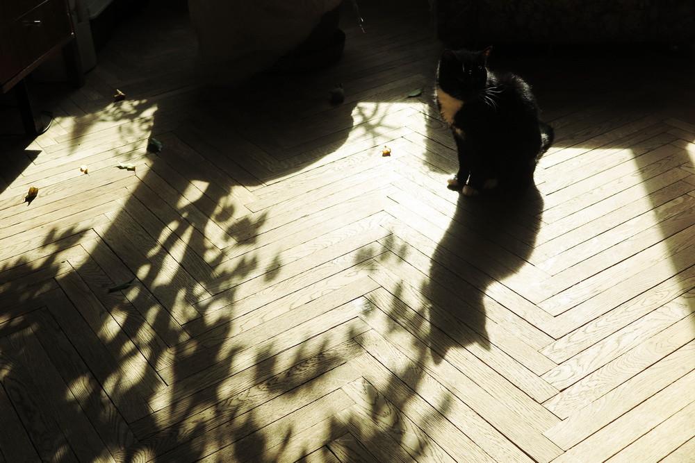 16.04.03 Тень от Кати-
