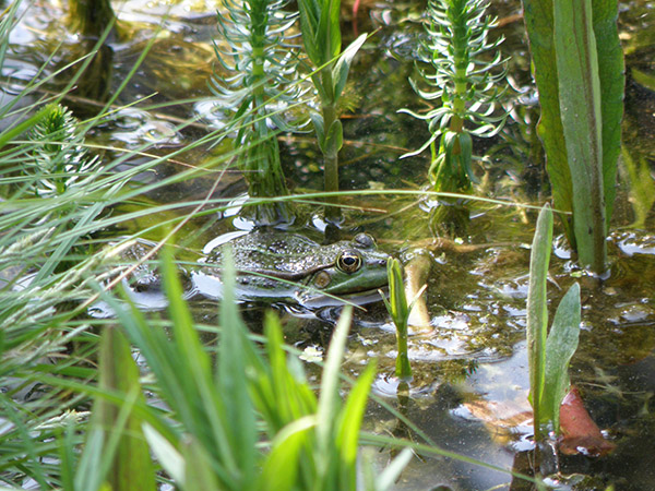 19 - amphibians