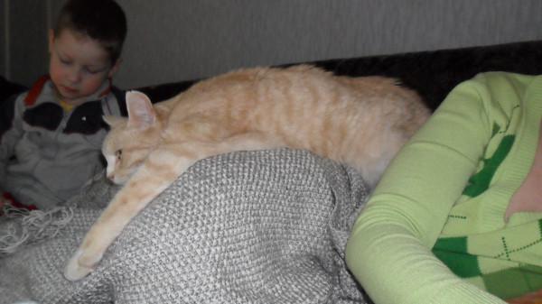 Кот похудел и все время спит