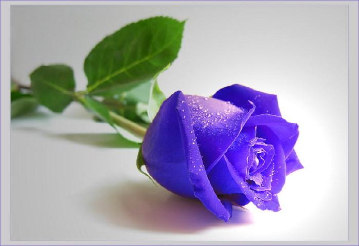 Синие красивые цветы в мире фото