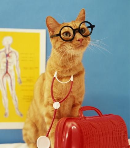 Fashion_cat_3_Koteiko.ru_