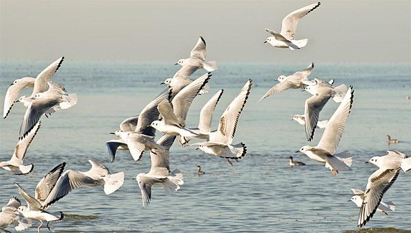 05_flock_bonapartes