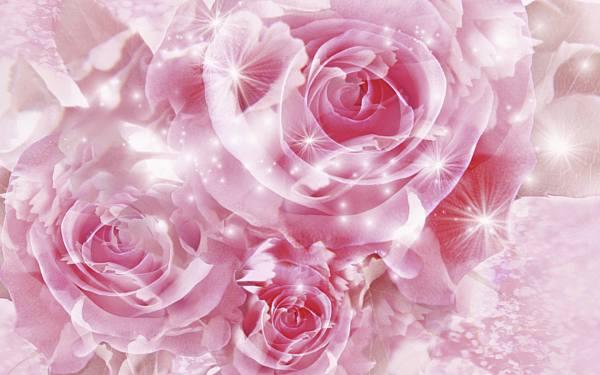 Pink_rose_wallpaper