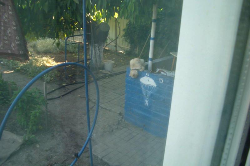 Фото через окно; иначе проснётся котяра — и снимку не бывать...)