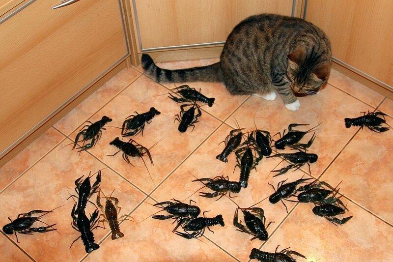 Фото из инета. Но и у меня в кухне было нечто подобное, ужасное, ОГРОМНЫЕ ТАРАКАНЫ!!! )))