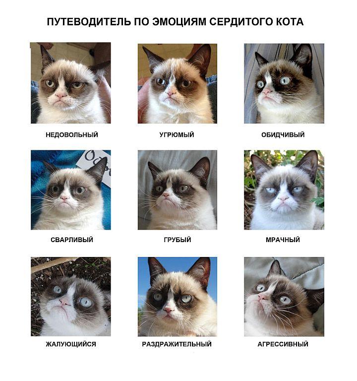 Grumpy-Cat-Emotion-Chart+++