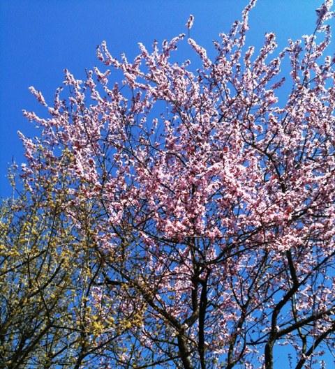Мюнхен. Весна. Апрель .