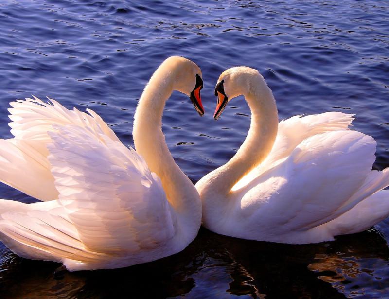 Сердца картинки, символ любви открытки