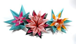 Gorguera flowers