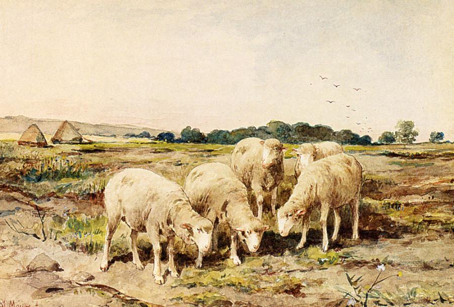 Mauve_Anton_Grazing_Sheep