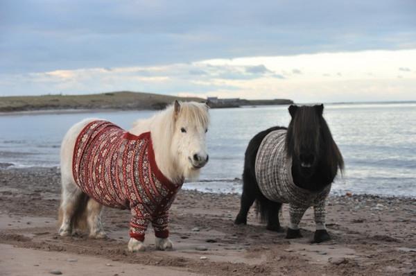 пони в свитерках 2