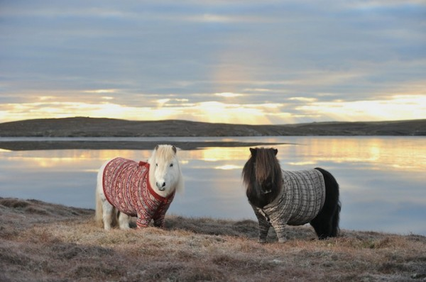пони в свитерках 1