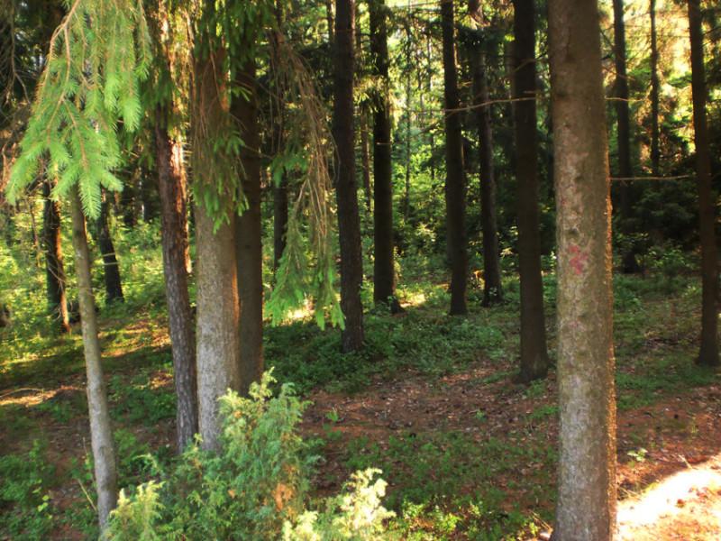 Верхний лес