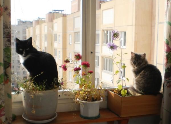 Выращиваем кошек