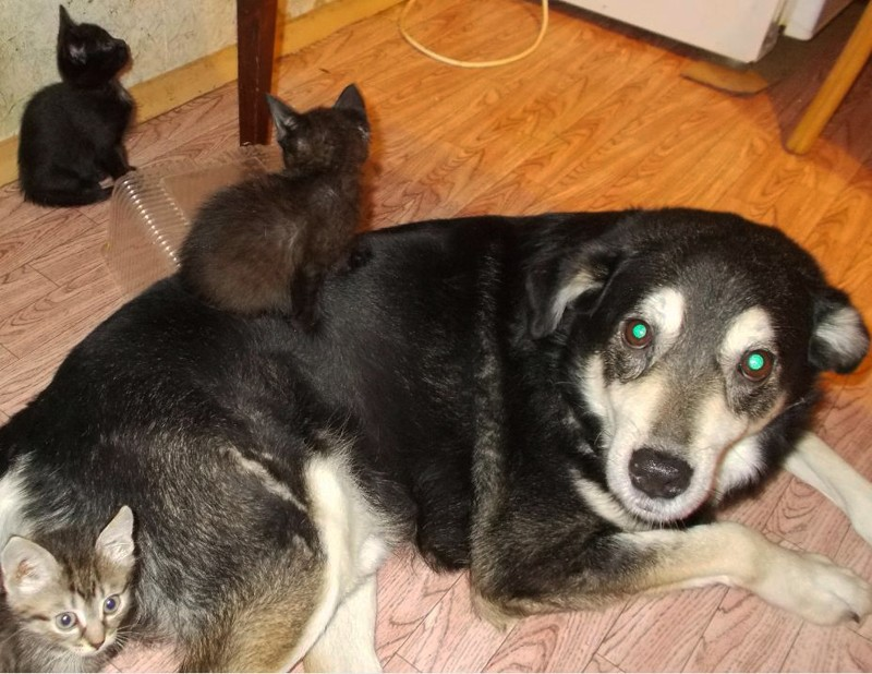 пёс и кот