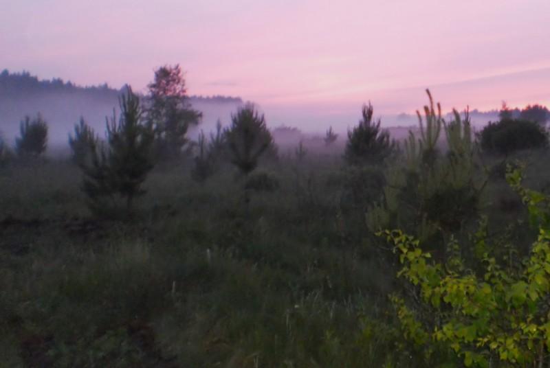 Туман с болота