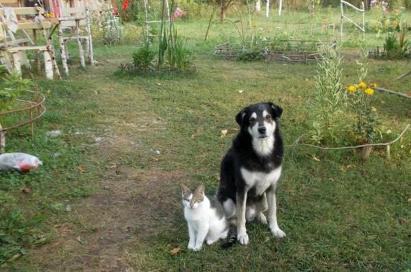 2014. Васенька с пёсом