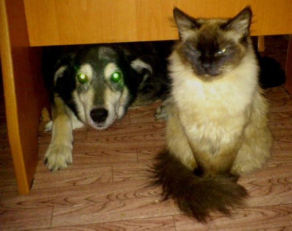 Бобик и Сима
