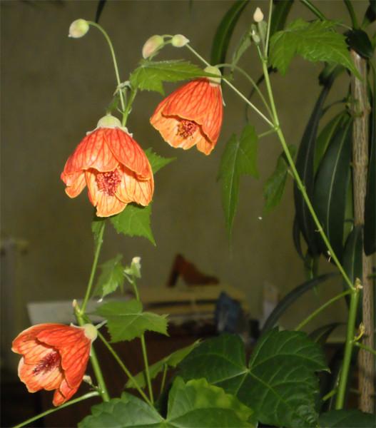Цветёт и на зиму... Ноябрь 2012