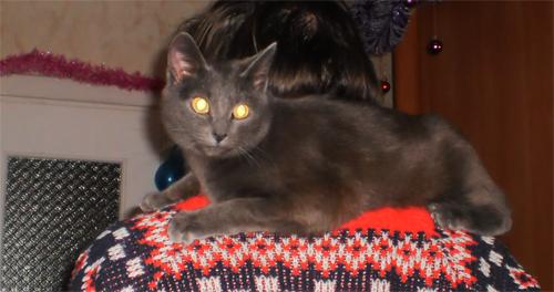 Кошка №4