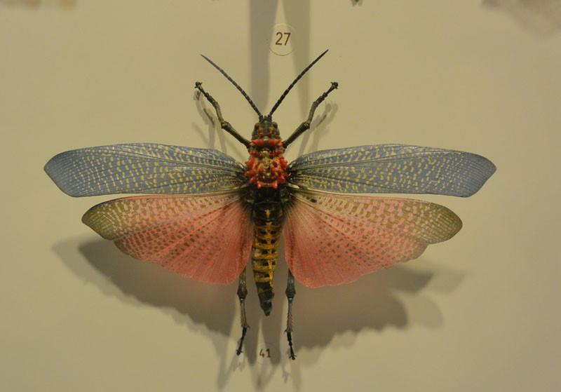 nasekomie muha