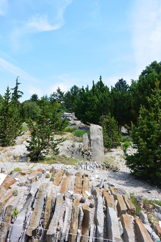 alp kamni