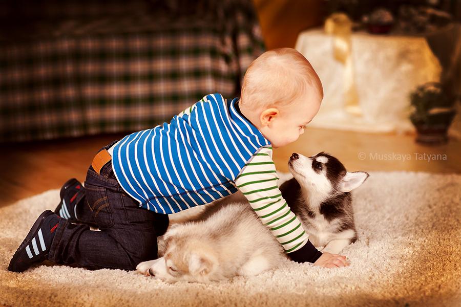 фото с щенками хаски и малышом годовалым грузы