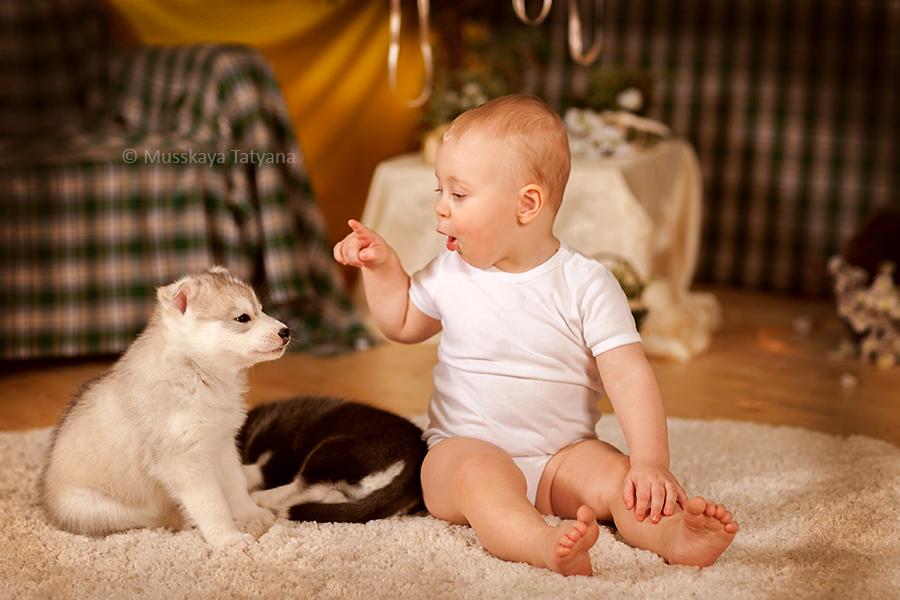 фото с щенками хаски и малышом годовалым коричневый