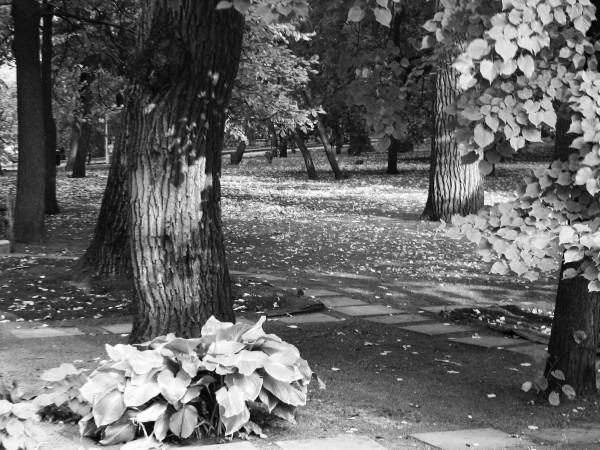 Вечерний свет в осеннем парке (сегодня).