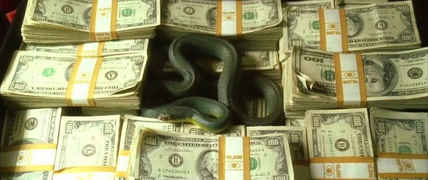 money-and-snake