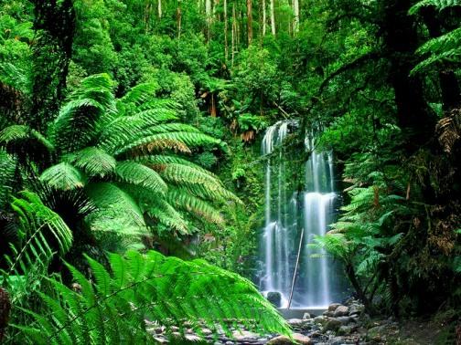 Почему хлоропласты имеют зеленый цвет