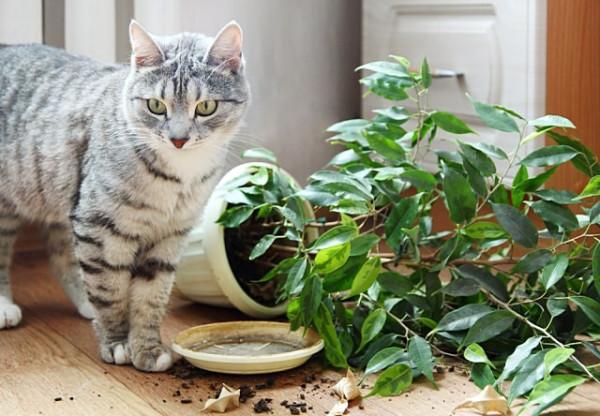 Как развлечь кошку, пока все на работе?: my19edwin — LiveJournal