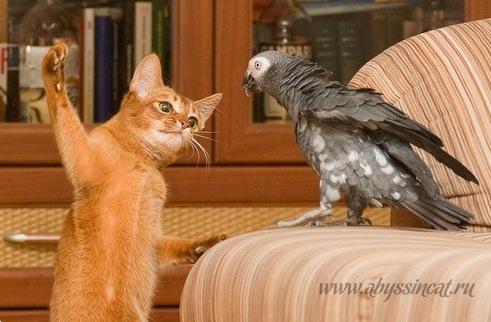 Фото котов с попугаями