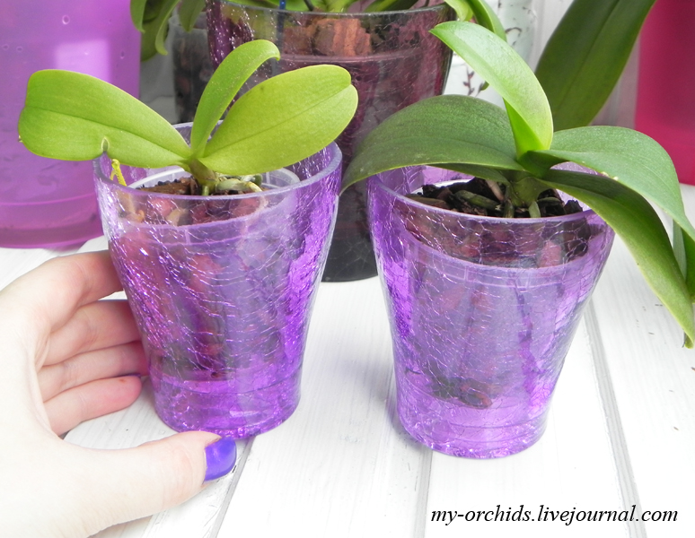 Кашпо для орхидеи фаленопсис