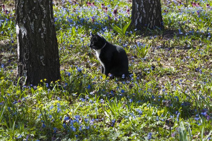 коты-01.jpg