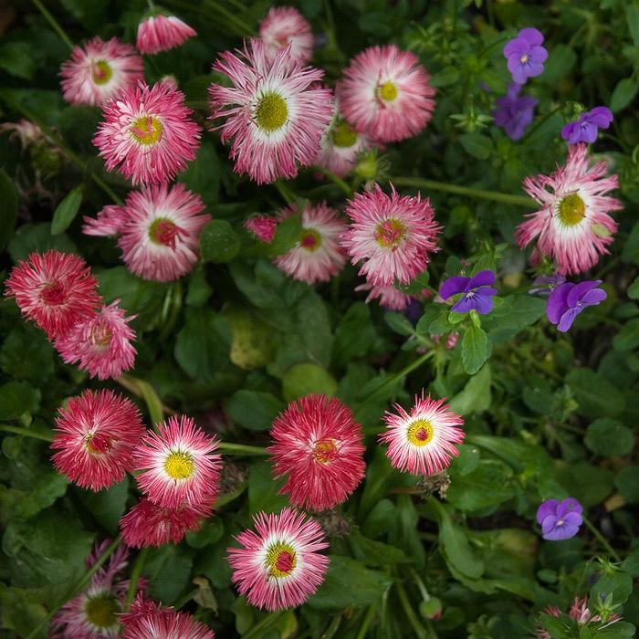 Цветы имена