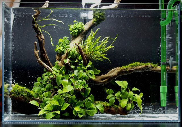 wabi-kusa с сайта https://happylittlegirl-weiting.blogspot.com/2019/05/getting-started-with-aquascaping.html