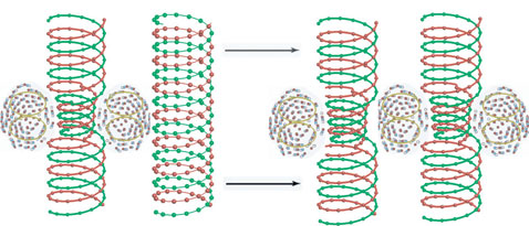 03-02 плазменная ДНК